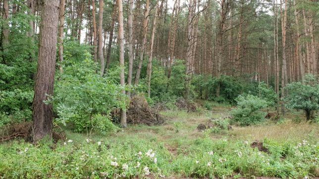 1/2 udziału w prawie własności nieruchomości gruntowej Dąbrówka Nowa