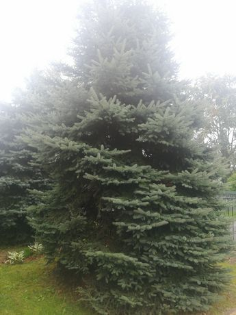Drzewo na opał za dormo