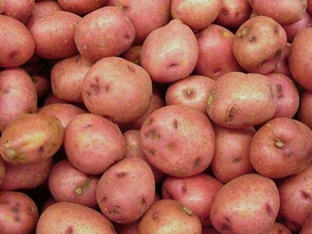 Картошка славянка 500кг