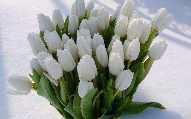 Тюльпаны к 8 марта опт