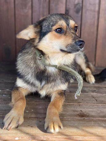 Винни, 1 год, привита, стерильна, вес 11,5 кг. Собака, щенки, щенок.