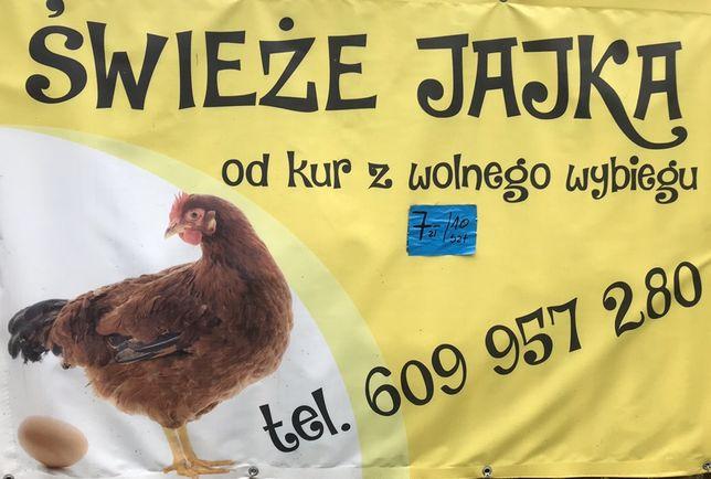 Jaja kurze bardzo duże ! Jajka od kur z wolnego wybiegu |8 zł|