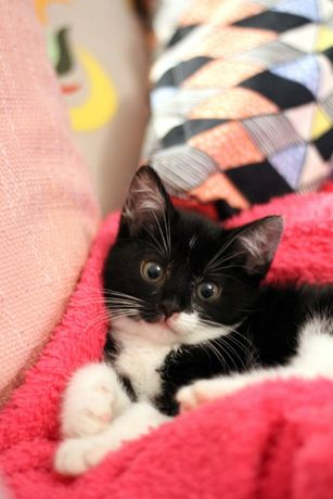 Malutka kotka Tośka szuka dobrego domu
