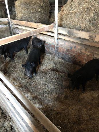 Ферма для содержания крс и прочих животных