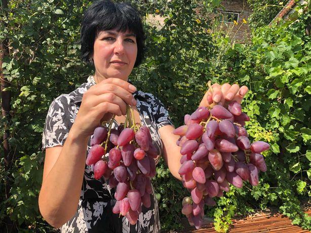 Продажа саженцев  винограда!