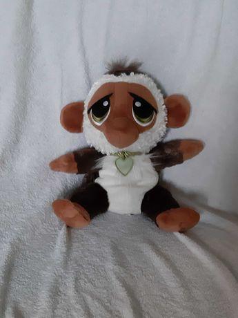 Pluszak - małpka która robi fikołki