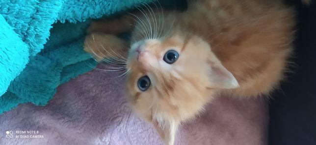 Отдам котят даром в хорошие руки Буденновский район