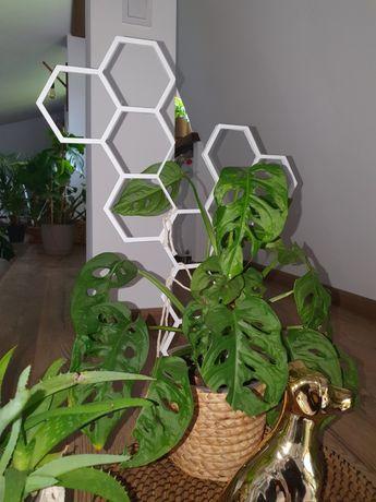 Drabinka podpórka do kwiatów hexagon