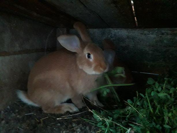 Продам молодняк кролей