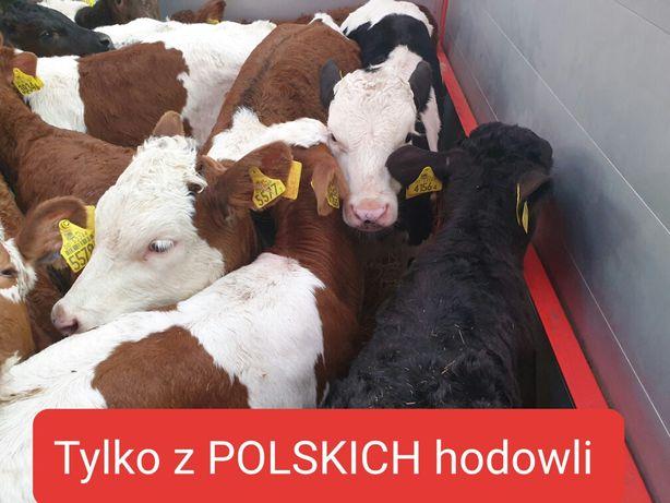 Polskie hodowlane jaloweczkiii duzy wybor