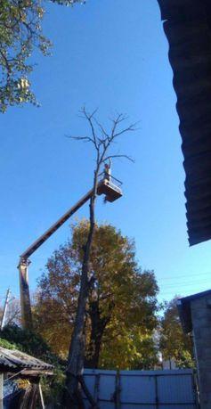 Спил деревьев любой сложности. Спил и обрезка. Расчистка участков