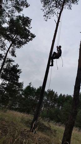 Wycinka Drzew Metoda Alpinistyczna