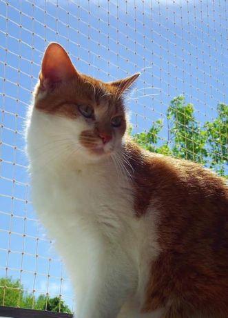 Siatka dla kota na balkon okno. Montaż zabezpieczenie. Osiatkowania