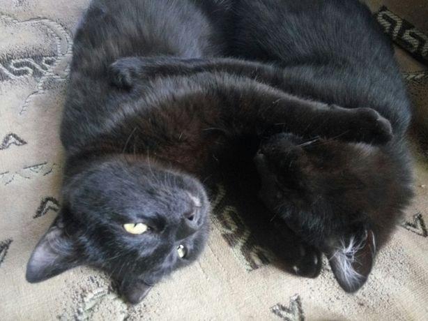 Два брата-акробата, им чуть больше года