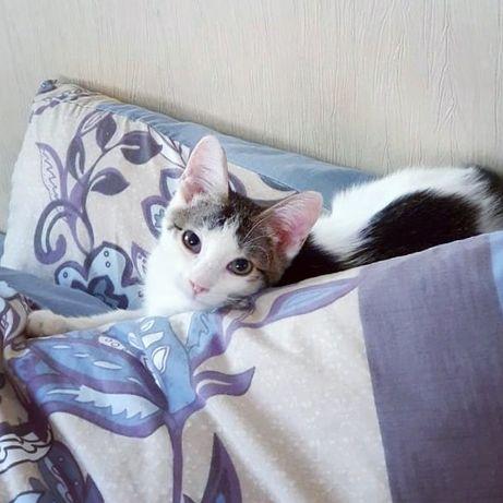 Котёнок, мальчик, 3.5 мес, очень нужен дом и любящий человек