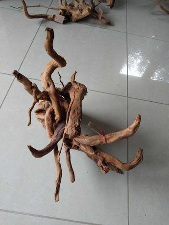 Średnie korzenie red moor wood 50-75cm