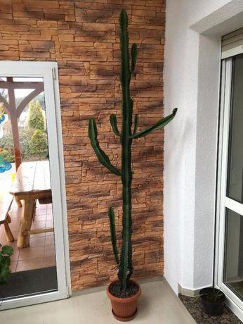 Kaktus 2,50m