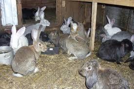 Продам кроликов ,разного возраста