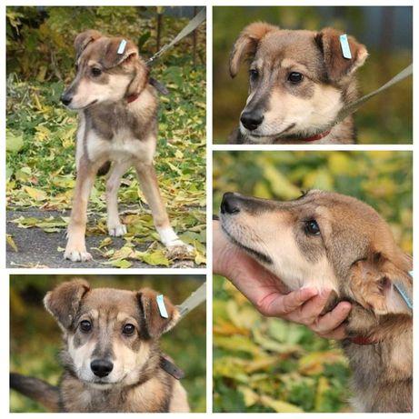 Мира, небольшая собака, срочно нужен дом, 7 мес