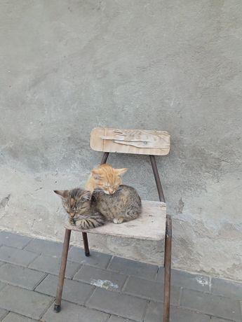 Oddam koty 1 kocica 1 kocurek