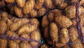картопля товарна 4 грн 50 коп за кг