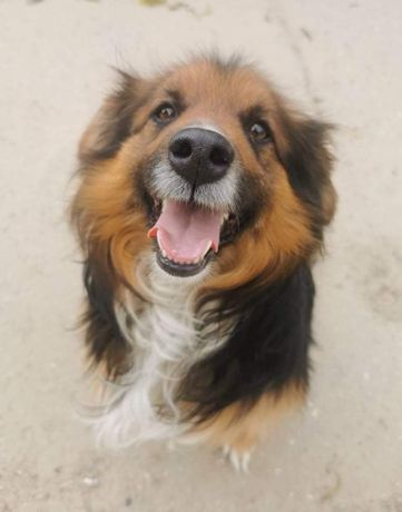 Rafi, pies który kocha cały swiat