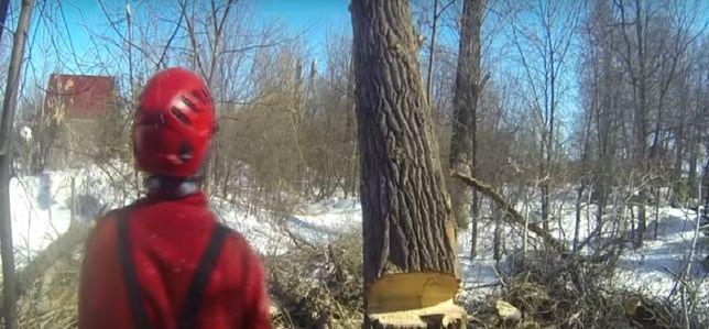 wycinka drzew pielęgnacja drzew porządkowanie działki koszenie traw