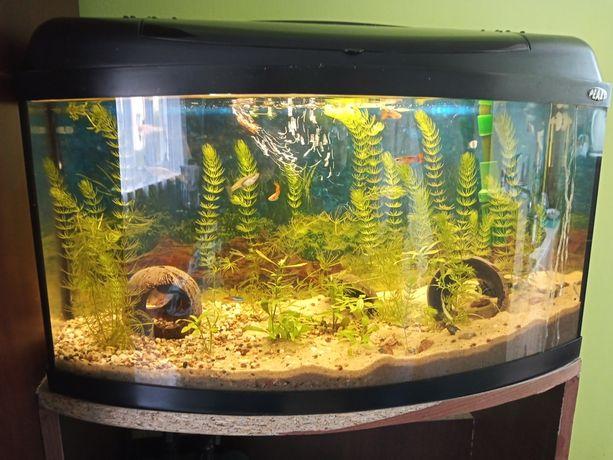 Akwarium 60l profilowane z pokrywą