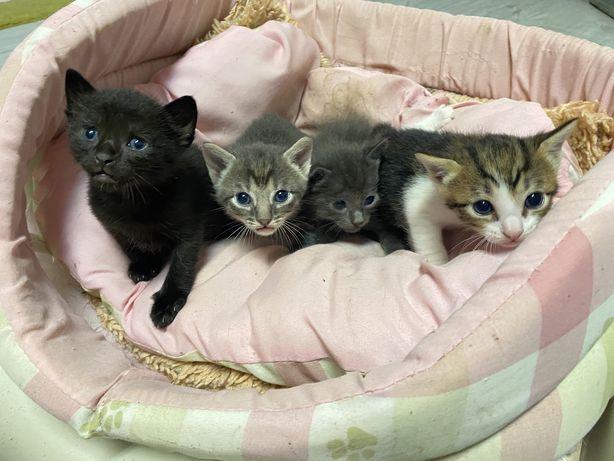 4 Gatinhos para adoção responsável