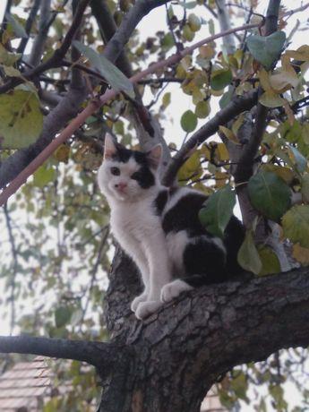 Отдам котика красавца