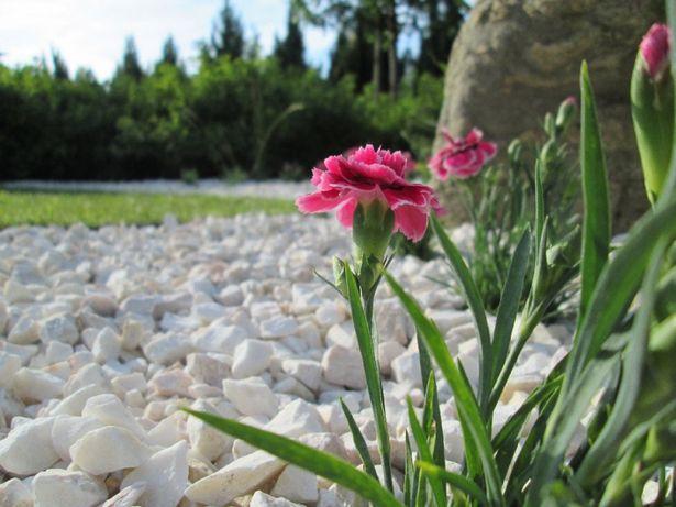 Grys biały biała Marianna kamień naturalny darmowa dostawa +głaz