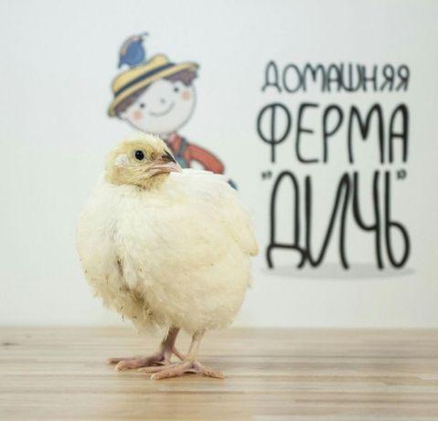 Инкубационные яйца перепела 7 Европейских пород - Ферма Дичь