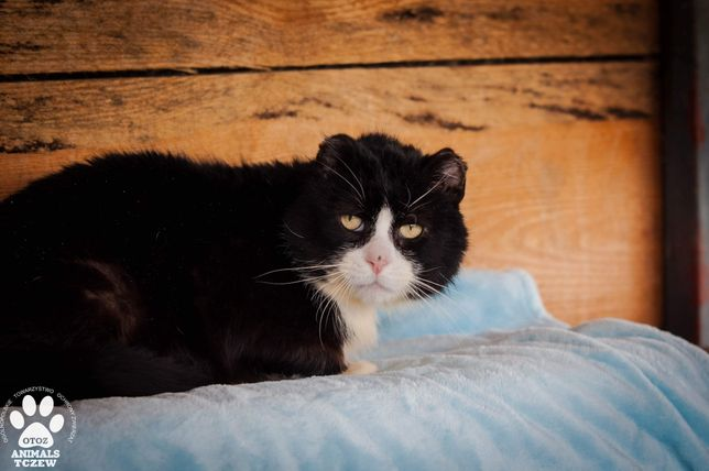 OTOZ TCZEW - CHUCK NORRIS - cudowny kot marzy o prawdziwej rodzinie