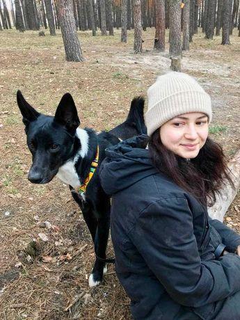 Обучение и дрессировка собаки и щенка, консультация кинолога, кинолог