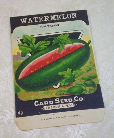 Arbuz Tom Watson Nasiona arbuza do uprawy z USA sadzonki arbuzów
