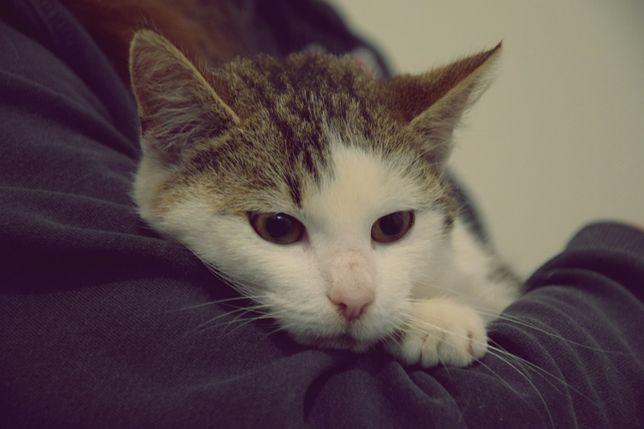 Alex gaśnie w klatce! Dom potrzebny na już! Kociak do adopcji!