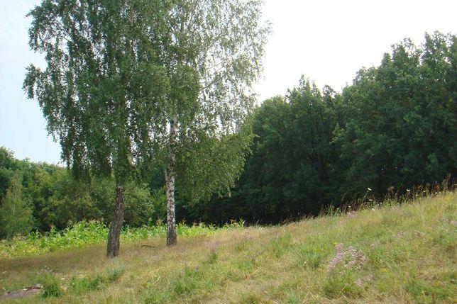 Большой земельный участок примыкающий к лесу.