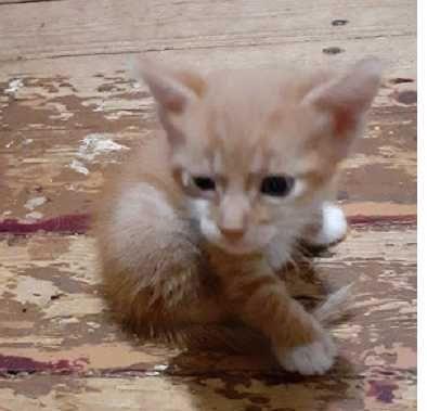 Возьмите котёнка из приюта.