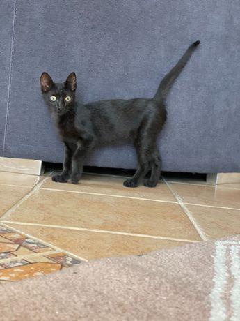 Gato preto para adoção responsável