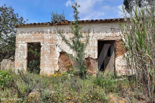 Moradia para reconstruir e terreno  com 30000m2 com vinhas produtivas