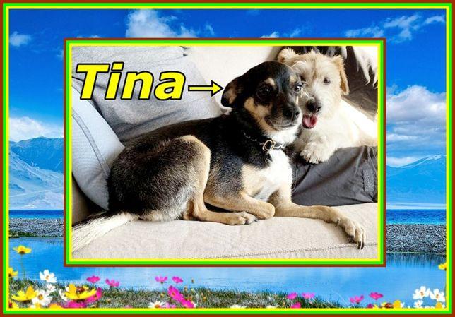 TINA – młoda, urocza, wesoła psina