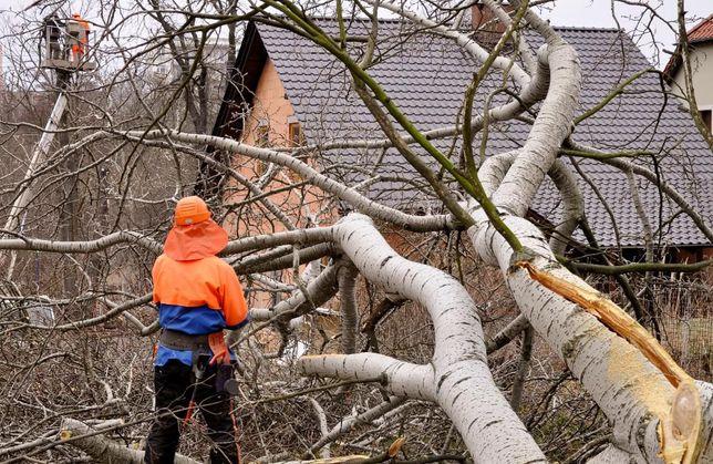 Profesjonalna wycinka drzew. Wycinka z podnośnika. Przycinanie gałęzi.