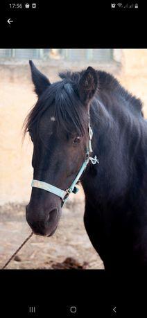 Лошадь, кобила, кобилу обмен
