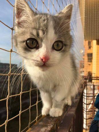 Siatka na balkon, siatka dla kota, siatka przeciw ptakom