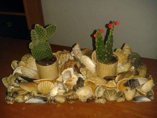 artesanato em conchas