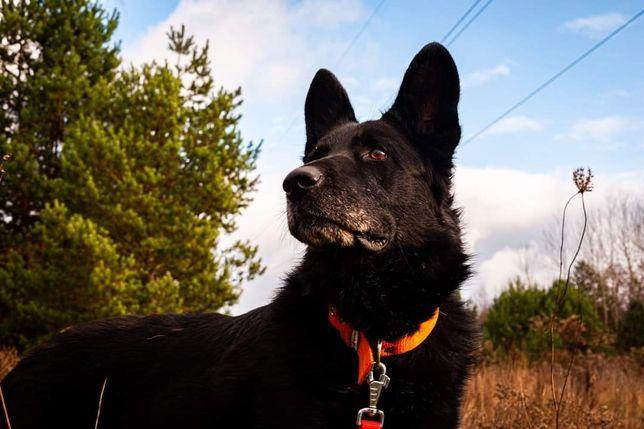 MIRUŚ - Dostojny Psi Senior Do Adopcji
