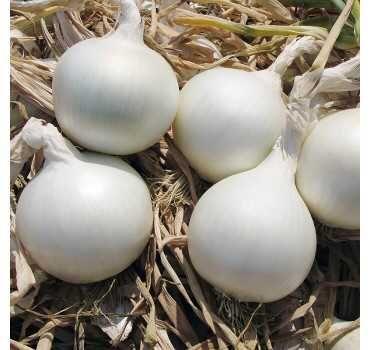 Лук севок озимый,Цибуля тиканка,Голландия Сноуболл Айс ПерлF1-0,5кг