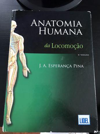 Anatomia da locomoção Pina