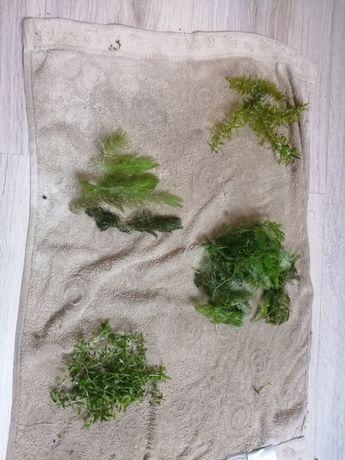 Rośliny z przycinki