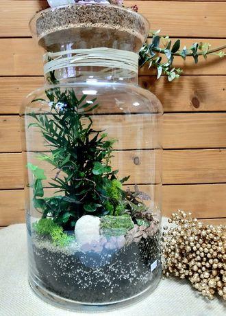 Las w szkle w słoiku naczyniu kompozycja roślinna terrarium prezent